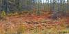 Carpet of colour ((nature_photonutt) Sue) Tags: ironbridgeareaontariocanada northernwoods fall colours transition