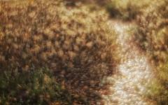 forest (AdisX   Andrius Maciunas) Tags: soft softfocus bokeh shining shine colorful colors color ethernal eternal monocle monolens mood single singlelens diy lens hack am89 89mm f35 m42 lithuania nature outdoor andriusmačiūnas maciunas adisx focus sf bokehlicious