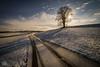 Première neige (Olivier Rapin) Tags: sonyalpha7 samynag 14mm f28 suisse neige fribourg romandie arbre treechemin misery