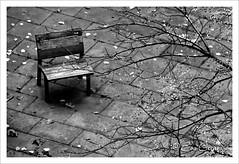 Soledad - Loneliness (Eva Ceprián) Tags: blancoynegro blackandwhite parque park árbol tree soledad loneliness frío cold exterior outdoors tristeza sadness otoño autumn banco bench hojas leaves ramas branches evaceprián nikond3100 tamron18270mmf3563diiivcpzd