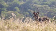 Nairobi-Nationalpark-7444 (ovg2012) Tags: kenia kenya nairobi nairobinationalpark