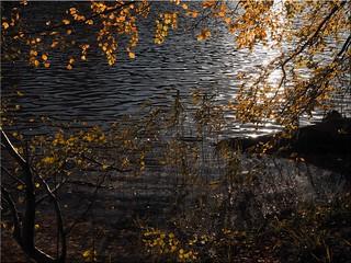 Autumn  at  the  lake  Uklei