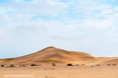Namib desert near Swakopmund, Namibia (George Pachantouris) Tags: namibia africa southern travel holiday namib desert lizard gecko dunes sand