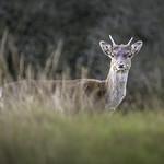Watching Me, Watching You (Explored 21/11/17) thumbnail