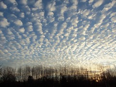 A perfect day? (LivGreen07) Tags: morning sky clouds cirrus waves gravity effects sunrise sun trees
