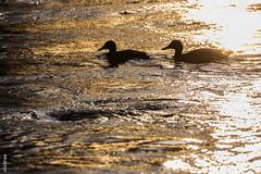 Gegenlicht/backlight -853809 (clickraa) Tags: gegenlichtaufnahmen with backlight sonnenlicht sunlight river ruhr