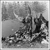 Le Corbeau et le Renard (michellouvel85) Tags: barrage vendée noiretblanc formes sécheresse souche