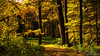Liesbos (BraCom (Bram)) Tags: 169 bracom bramvanbroekhoven ettenleur holland liesbos nederland netherlands noordbrabant northbrabant autumn boom boomstam bos fall foliage forest gebladerte herfst pad path sunny tree treetrunk widescreen woods zonnig breda nl
