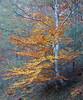 TARDOR AL COLL DE L'ULLAT (Joan Biarnés) Tags: tardor otoño colldelullat albera françe francia 235 sonyrx100m3