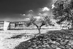 Olivetree in Knossos (Cyclase) Tags: knossos tree bare baretree kreta crete palace monochrom greece griechenland landmark architecture sun historical historic archeology einfarbig baum himmel gras landschaft