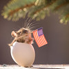 mouse in egg holding an American Flag in mouth (Geert Weggen) Tags: americanflag waving americanculture animal animalwildlife animalsinthewild closeup cultures cute day flag government independence nationalflag nationallandmark nature nopeople patriotism photography politicsandgovernment red rippled shape starshape striped sweden symbol theamericas traveldestinations usa unity vertical whitecolor wind mouse egg geert weggen hardeko bispgården jämtland ragunda geertweggen