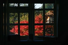 Autumn Window (Deepgreen2009) Tags: red foliage autumn window brilliant colour glow sunlight framed house home
