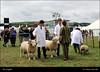 The English IMG_5736 North Devon Show (Trevor Durritt) Tags: candid ©trevordurritt canoneos600d people theenglish canonefs24mmf28stm northdevonshow devon england pancake farming animals agriculture dslr sheep