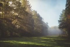 Misty spirit (HFF) (der_peste) Tags: hff fence mist fog foggy misty nebel bäume sonnenlicht sonnenaufgang sonnenstrahlen wiese trees meadow lawn sky raysoflight leaves autumn fall forest