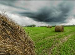 Clouds (Tanja-Milfoil) Tags: milfoil tanja regenwolken gewitterwolke shot grains straw bales strohballen himmel clouds nikon august