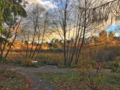 lost lagoon skyline (iggy j) Tags: lostlagoon stanleypark vancouver autumn fall