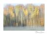 Color palette (www.nathaliecapitan.com) Tags: icm trees nature autumn