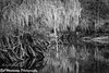 Spanish Moss Bend on Fisheating Creek (BobHartmannPhotography) Tags: bw hartmann landscape swr l bcc201501 fisheatingcreek bobhartmanncom bobhartmann bobhartmannphotography wildlife 1365 nature hiking everglades 365 birds c2017bobhartmann wwwbobhartmanncom fl usa