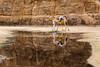 Desert scene. (Victoria.....a secas.) Tags: sáhara chad desierto desert camello camel reflejos reflections