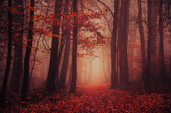 Secret Garden III. (Zsolt Zsigmond) Tags: secret garden mystical autumn forest red foliage fall fog mist trees woods woodlands november nature landscape ligt