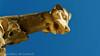 Gargouille (détail) (jeanmarc.deconinck) Tags: metz cathedrale sculpture art gargouille gueule bestiaire bleu jaune pierre