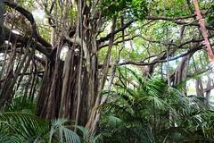 LHID 139 (newnumenor) Tags: australia lordhoweisland nsw
