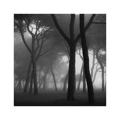 Connected#1 (www.charlottegilliatt.com) Tags: venice2017 fog tress connected bw atmosphere moody mist