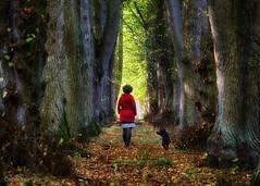 Autumn Walk (Collin Key) Tags: woman autumn trees fall dog alley roseburg schleswigholstein deutschland de