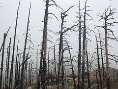 (Plannerd) Tags: wildfire fire forestfire colorado pudrecanyon larimercounty naturaldisaster hazard hazards naturalhazard