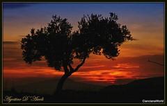 Tramonto di Novembre con olivo - 2017 (agostinodascoli) Tags: olivo albero cianciana sicilia agostinodascoli nikon nikkor tramonto sunset paesaggio cielo monti texture nature