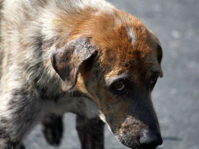 Многолетний убийца смоленских собак попал вбазу русских живодеров