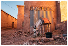 Donkey, Aït-ben-Haddou, Morocco (Bigmob Dontwannastop) Tags: donkey ass animal domestic village ancient red earth architecture house wall gate door town country farm