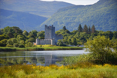 On the shore of Lough Leane (angelsgermain) Tags: castle tower shore lake water woodland plants hills reflections middleages clan odonoghue killarneynationalpark countykerry ireland éire