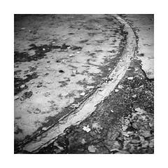 ... (Pietro Bevilacqua) Tags: mediumformat autumn leaves blackandwhite squareformat fomapan fomadon lqn keiv 60 selfdeveloped darkroom filmisnotdead filmphotography fineart composition comma 80mm 120 italy corridonia macerata villa fermani neorealism abstract believeinfilm monochrome