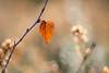 autumn love (Emma Varley) Tags: leaf autumn heather bokeh light soft november westsussex sullingtonwarren