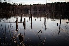 death lake 2 | Hessen (mz_view) Tags: see lake dark wasser water canoneos5dmarkii matthiaszabanski