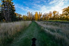 Cortana at Red River State Recreation Area (Tony Webster) Tags: cortana eastgrandforks minnesota october redriverstaterecreationarea autumn dog fall unitedstates us