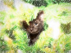 Kittens (Thunder1203) Tags: canon christmas christmastree feline hohoho merrychristmas santa claws decorating family kittens topazlabs