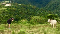 The model and the photographer ! EXPLORE 12/12/17 💕 (Ces♥JM ♪♫ :-)) Tags: photography animal december philippines field white sweet green photographer mountains cow