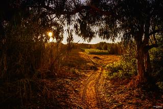 Two sides of autumn - Dois lados do outono
