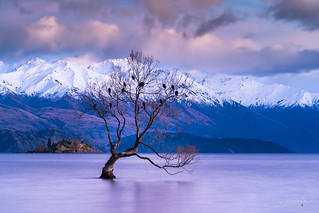 Lonely Tree II Lake Wanaka- NZ