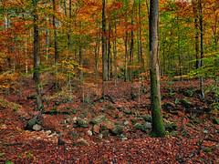 Where's Waldo? (boriches) Tags: squirrel ozarks missouri autumn
