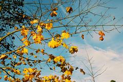 DSC_1857 (FMAG) Tags: 2017 żabieniec zalesie jesien