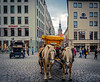 (Tony_Brasier) Tags: nikon horse cars bluesky buildings people hotel sigma sun d7200 dresden germany location lovely 1750mm