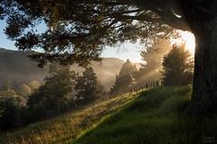 Morning light (Thibaud Chanfray) Tags: sun sunrise sunrays lights tree countryside bush newzealand nature landscape nikon nikond3200