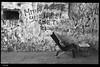 IMG_4526 (anto-logic) Tags: ruggine rust rusty old vecchia abbandonata abandoned strada street streetshot catena chain ingranaggio gear gearloose domenica passeggiata walking walk centrostorico oldtown pentagonodelbuontalenti muro wall muri walls mattoni bricks mattone brick fossi scali lavenezia livorno toscana officina fiori piante aria aperta lbertà libero bello puntodivista profonditàdicampo fence gardens green plants outdoors liberty lovely free pointofview depthoffield pov focus bokeh relax relaxed gorgeous nice pretty perfect eos canon