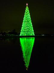 Árvore de Natal no Parque Barigui (Eduardo PA) Tags: curitiba paraná nokia pureview microsoft windows phone 950xl lumia wp árvore de natal no parque barigui