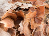 GIMGP3340 (Ice's photos) Tags: givre neige hiver winter provence snow leeves leaves leaf iceleaf deadleaves ice cold macro closeup floor froid nature outdoor outside glace