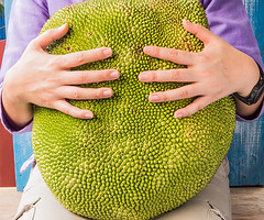 What in the World Is Jackfruit? (Our Healthy Lifestyle) Tags: jackfruit gourmet large freshness yellow agriculture nature fruit stem tree summer food