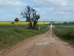 Rail Crossing near Yaapeet, Victoria (Diepflingerbahn) Tags: railcrossing mallee canola landscapes road roadsigns tree sign unsurfacedroad yaapeet victoria yellow panasoniclumixdmctz80